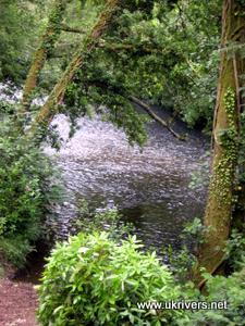 River Fowey near Lanhydrock, Cornwall